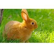 Rabbit 1080