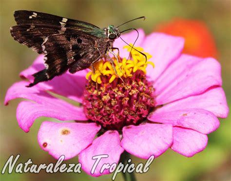 imagenes de flores que se reproducen asexualmente naturaleza tropical 191 c 243 mo se reproducen las plantas aqu 237