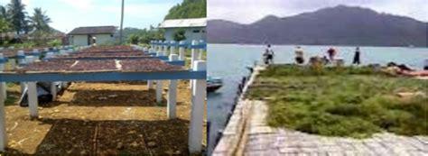 Kompor Optimum cara memanen rumput laut