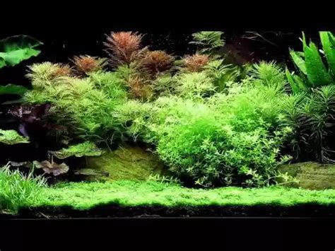 Aquarium Inrichting Ideeen by Aquarium Inrichten In 10 Stappen Doe Je Zo