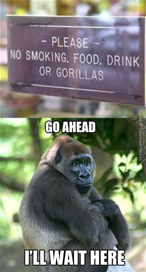 Funny Gorilla Meme - gorilla quotes funny image quotes at hippoquotes com