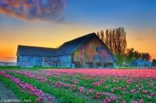 the flower barn tulip farm in mt vernon washington flowers field