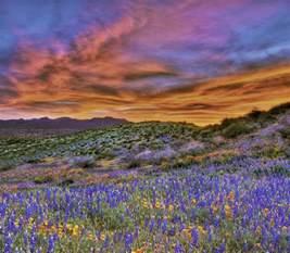 Flowers Sierra Vista Az - peridot arizona wikipedia