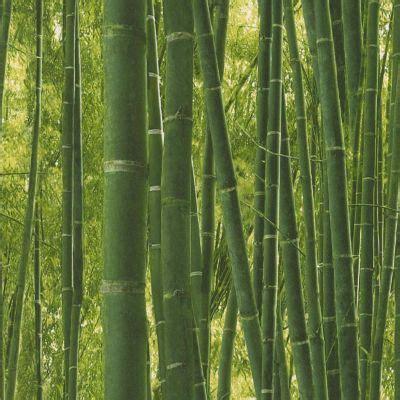 Tapisserie Bambou by Papier Peint F 244 Ret De Bambou Vert Castorama