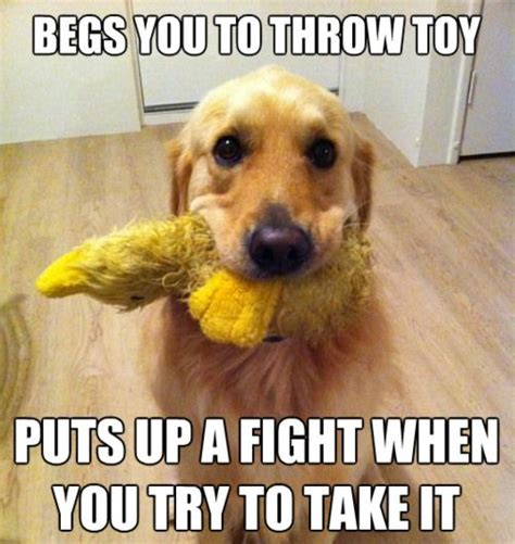 Funny Dog Pictures Memes - 67 best dog memes images on pinterest doggies puppies