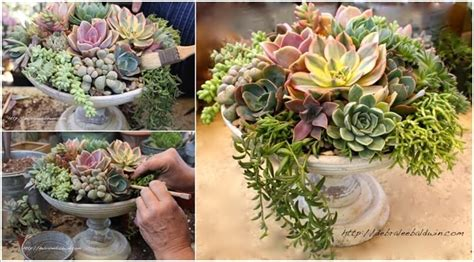 Succulent Planters Ideas by Amazing Interior Design New Post Has Been Published On