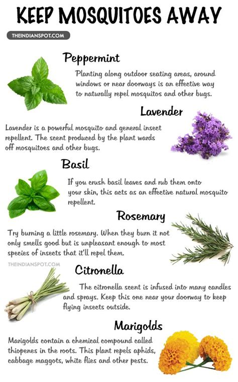 25 best ideas about mosquitoes on pinterest insect repellent plants where do mosquitoes live