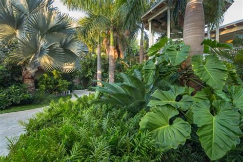 how to create a tropical backyard design a tropical garden hgtv