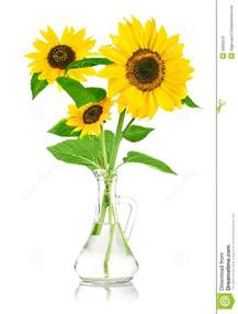 sunflower bouquet transparent clipart