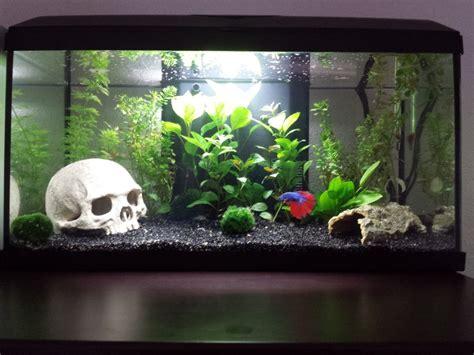 Mon Aquarium 54l Communautaire Mon Aquarium 54l Communautaire