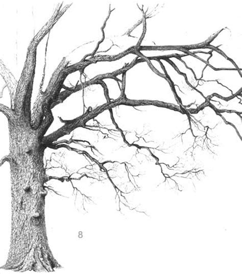 oak tree drawing drawing trees deciduous oak tree part 2 ballpoint