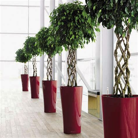 vasi per idrocoltura vendita hydro plants idrocoltura
