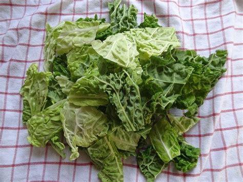 cavolo verza come cucinarlo cavolo verza un ortaggio sottovalutato ortofrutta roma