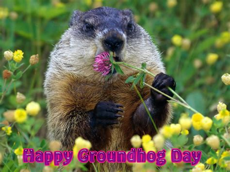 groundhog day and happy day 301 moved permanently