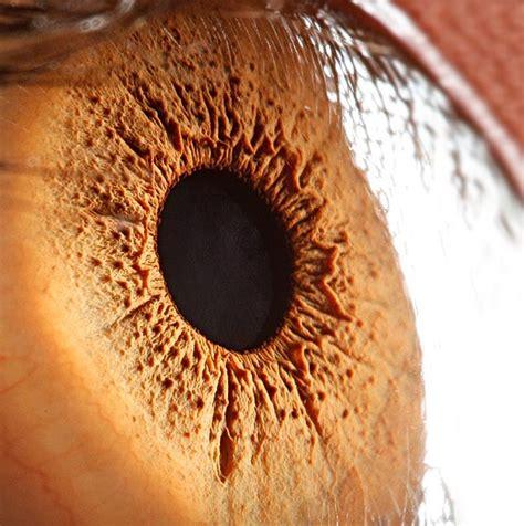 imagenes de ojos zoom extreme close ups of the human eye bored panda