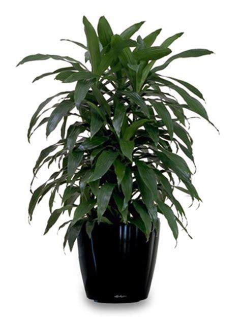 house plants     air purifiers air