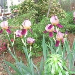 ls and shades winston salem nc landscaping photos of quot color every season quot from winston