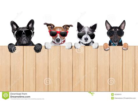 four dogs big row of dogs stock photo image 42290910
