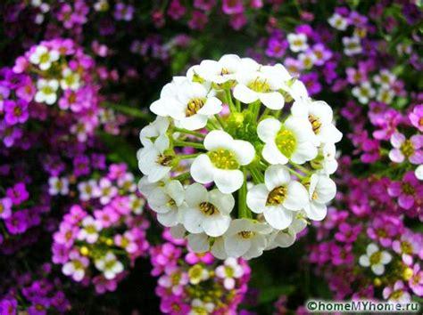 catalogo piante da giardino catalogo delle piante perenni
