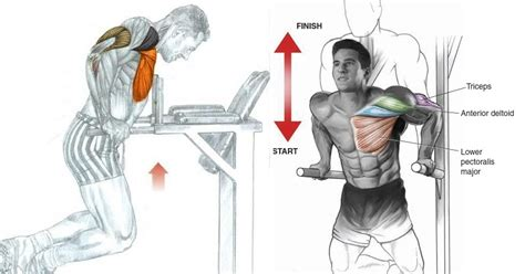 chest dips exercise all bodybuilding