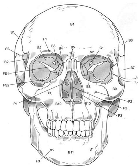 flashcards table on axial skeleton skull