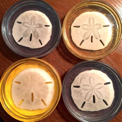 sand dollar craft projects 31 best sand dollar images on crafts