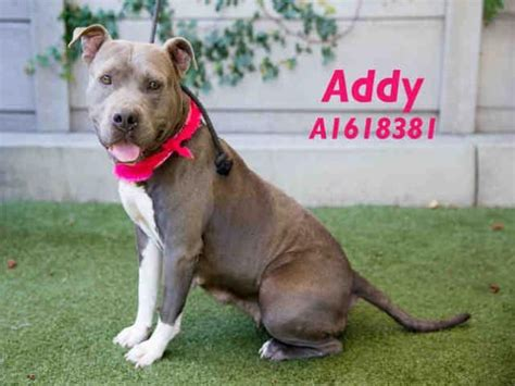 adopt a puppy los angeles 461 best images about second chances on