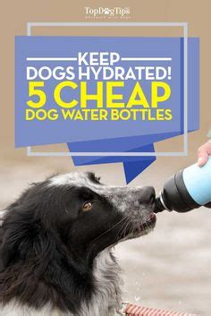 how much water to give a puppy 1000 images about must supplies on supplies wholesale pet