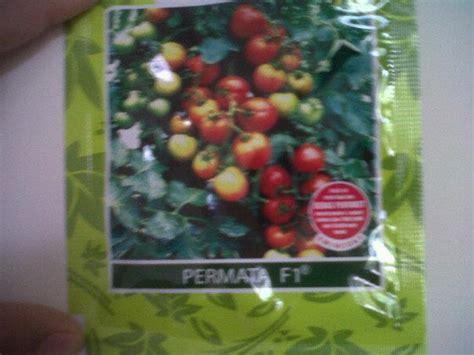 Benih Tomat Hibrida New Mutiara F1 toko dian tani penyedia bibit buah dan sayuran