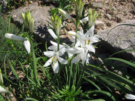 nomi fiori di montagna fiori di montagna bianchi gpsreviewspot