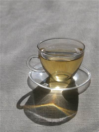 caffeine content of white tea