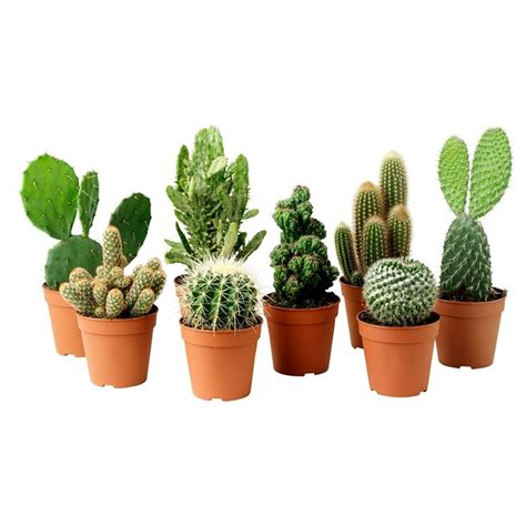 vasi piante grasse vasi piante grasse piante grasse vasi per piante grasse