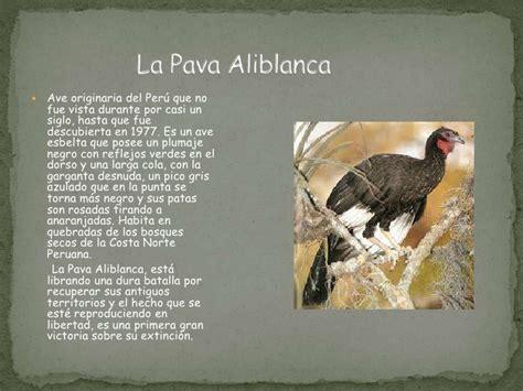 animales peligro extincion peru para colorear animales en peligro de extinci 243 n del per 250