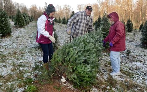 cut your own christmas tree albany ny where to cut your own tree in the capital region newyorkupstate
