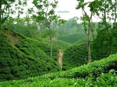 srimongol sylhet bangladesh tourist zone tea