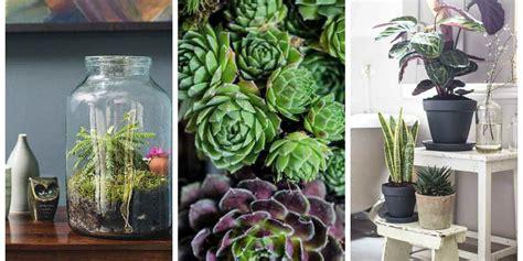 indoor small plants the top 10 indoor gardening tips