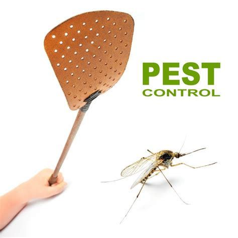 How Can Bed Bugs Live Without Air by How Pest Solutions Can Fight Any Cockroach All