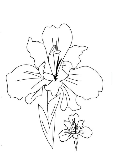 coloring pictures of iris flowers iris flower coloring pages flower coloring pages of free