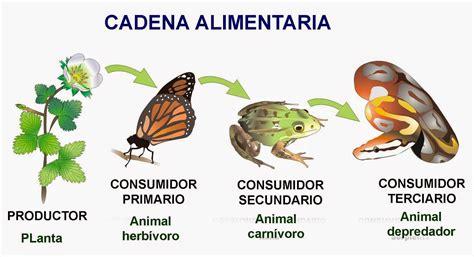 cadena alimenticia quienes son los productores el blog de quinto tema 5 los ecosistemas quot comer o ser