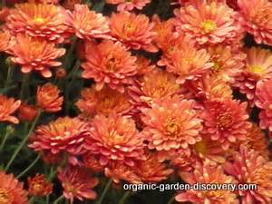 Balcony Container Gardening - flower magazines with dictionary of names