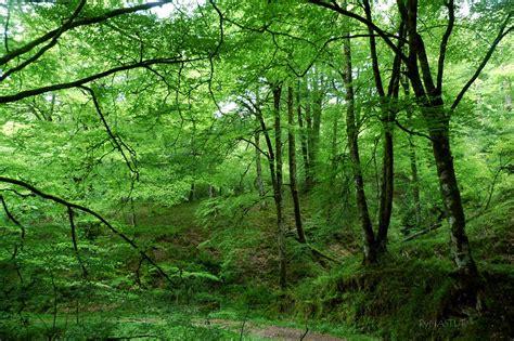 por una gentil floresta rutas de senderismo asturias