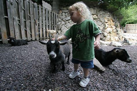 petting a petting zoo