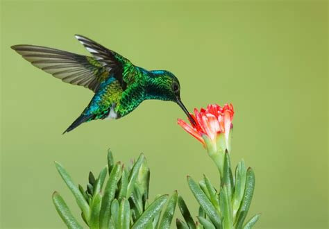 why google s new hummingbird algorithm is good news for
