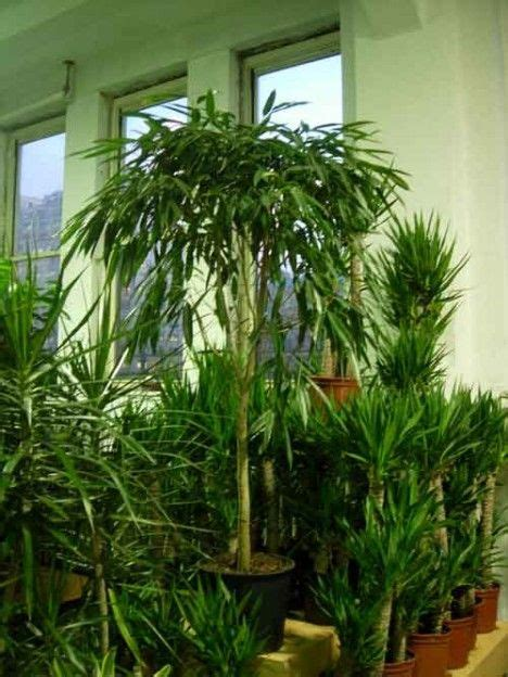 air purifying plants  homes offices