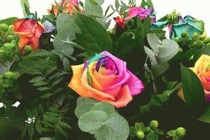 Diskon Benih Mawar Pelangi Rainbow Import jual benih mawar warna pelangi rainbow gwen keysha