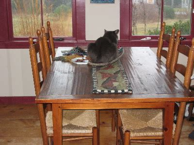 cat table blog hedgerow food plants gallery and landscape