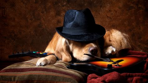 golden retriever guitar animals guitar hat golden retrievers guitar wallpapers hd