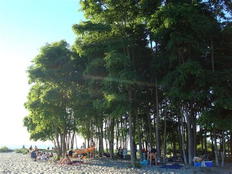 Golden Gardens Park Seattle by Things To Do In Seattle Golden Gardens Park Free