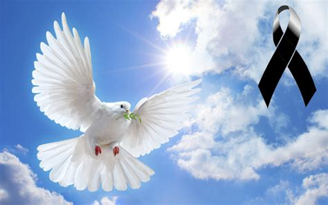 imagenes de palomas blancas de la paz paloma recipe dishmaps