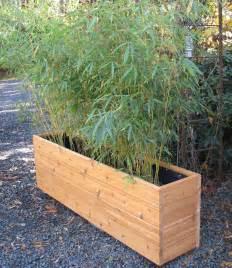 images outdoor bamboo photo copyright noah bell bamboo garden